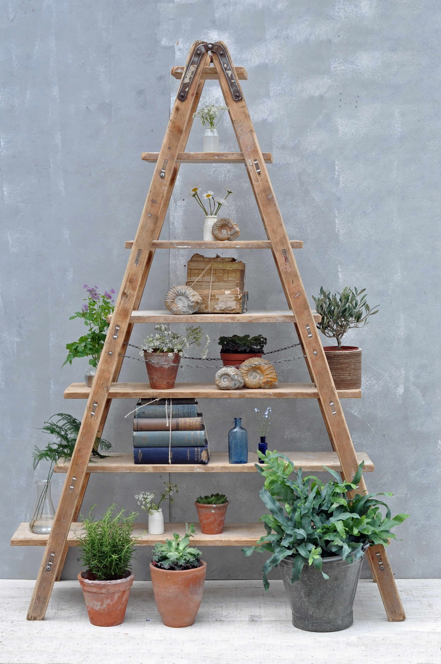 Recent Ladder Shelves With Vintage Reclaimed Ladder Shelves Rustic Shelving – Home Barn Vintage (View 10 of 15)