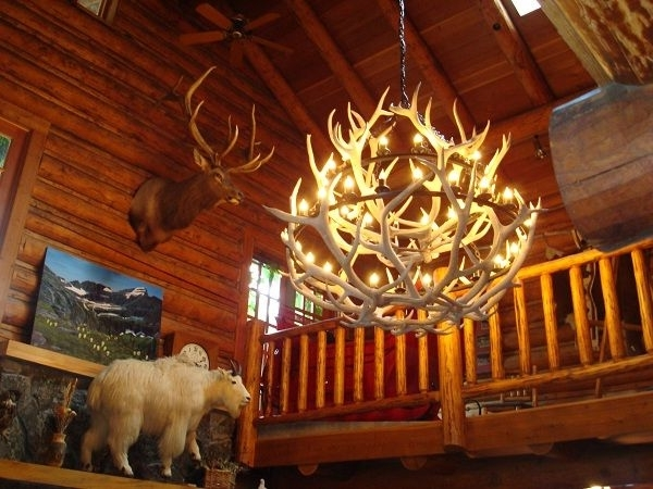 Best And Newest Antlers Chandeliers For Antler Chandelier (View 6 of 10)