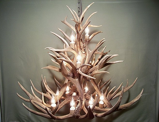 Fashionable Antler Chandelier Within Amazon: Real Antler Chandelier, 13 Lights, Shed Antler Art, Elk (View 7 of 10)