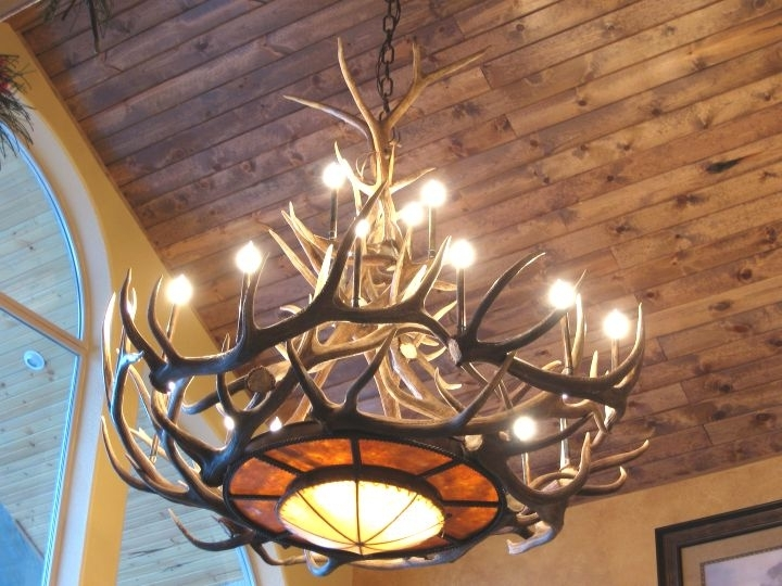 Turquoise Antler Chandeliers Pertaining To Well Known Antler Chandeliers For Sale (View 6 of 10)