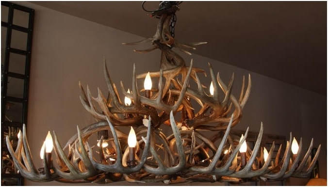Unique Antler Chandeliers In Northwest Montana In Well Known Stag Horn Chandelier (View 9 of 10)