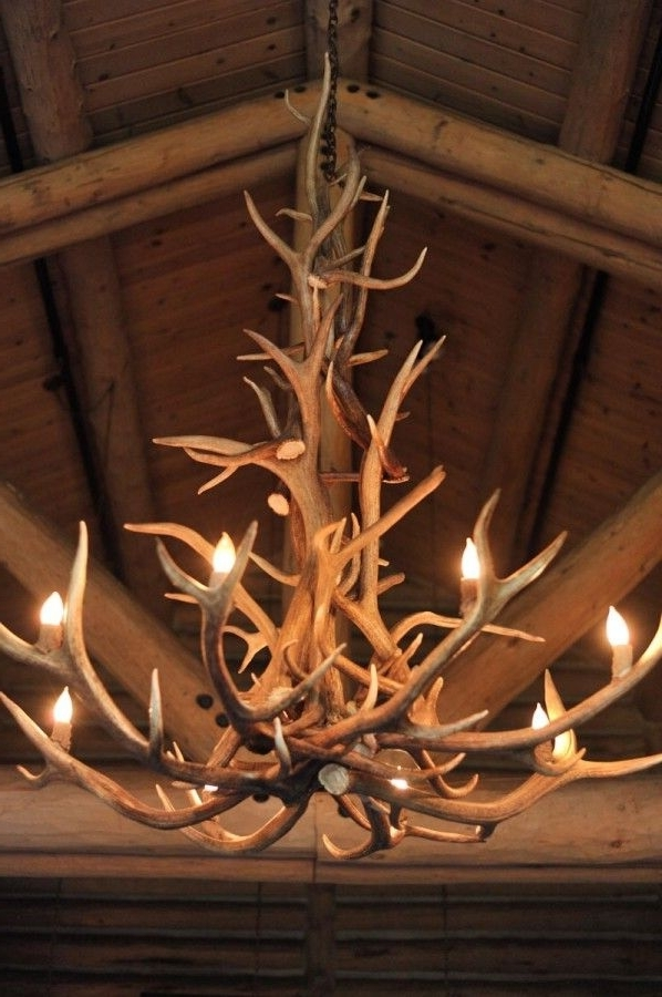 Well Known Antler Chandeliers Best 25 Antler Chandelier Ideas On Pinterest Pertaining To Antler Chandeliers (View 8 of 10)
