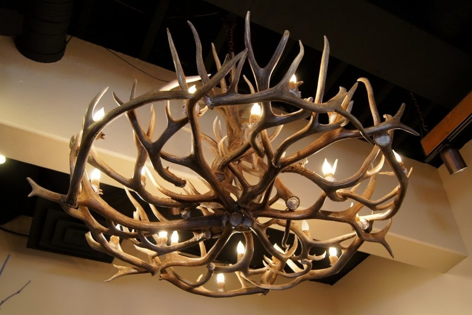Well Known Turquoise Antler Chandeliers With Regard To Elk Antler Chandelier For Complement Any Room (View 10 of 10)
